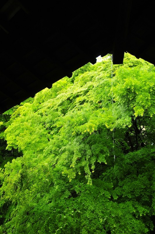 Spring Rain, Iwakura Jisso-in Temple, 6 (岩倉実相院)