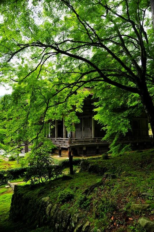 Shorinin Temple, Ohara (勝林院 大原)