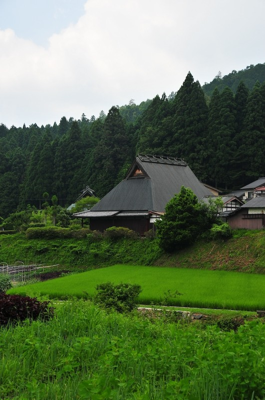 Rice field (田んぼ), 3
