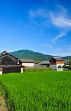 Summer Rice Field, 2