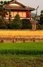 Summer Rice Field, Sunset