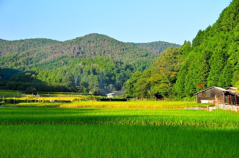 Near Shizuhara (静原)