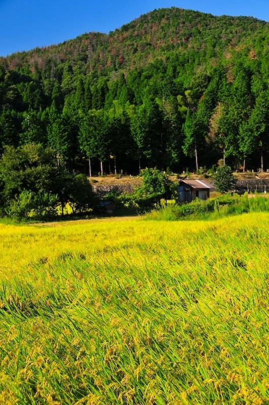 Near Shizuhara (静原), Windy Field