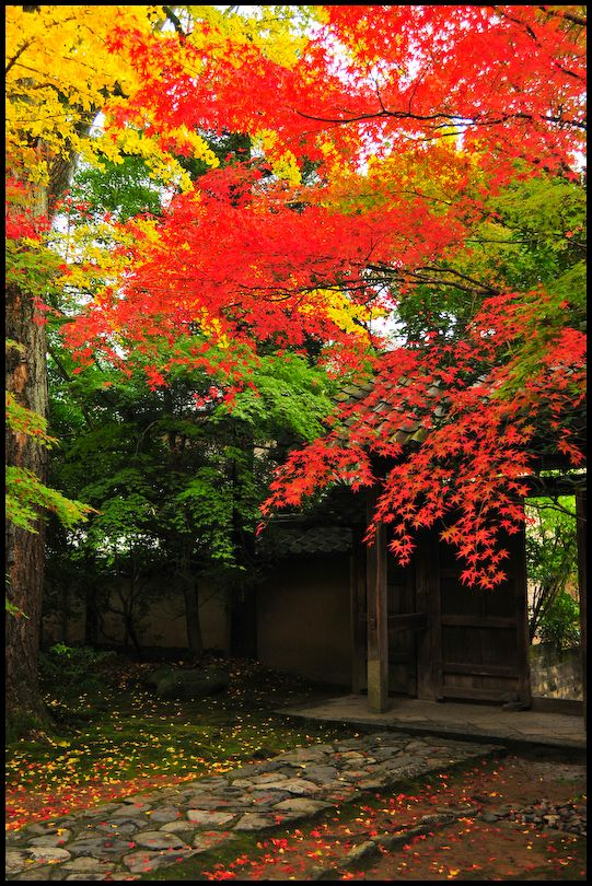 Temple Gate, Renge-ji (蓮華寺)