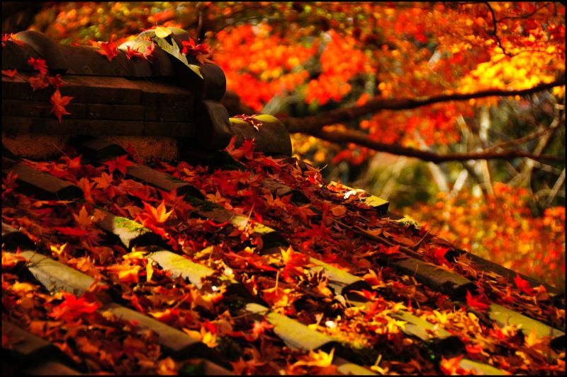 Temple Roof, Autumn