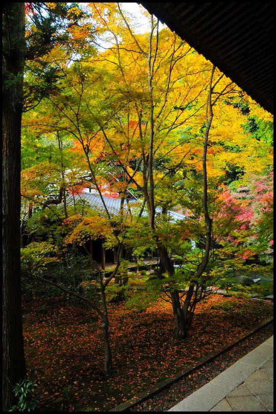 Renge-ji Temple (蓮華寺)