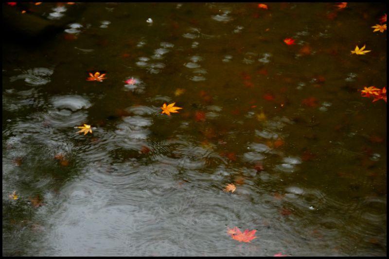 Rainy Day, Iwakura Jisso-in (岩倉実相院), 3