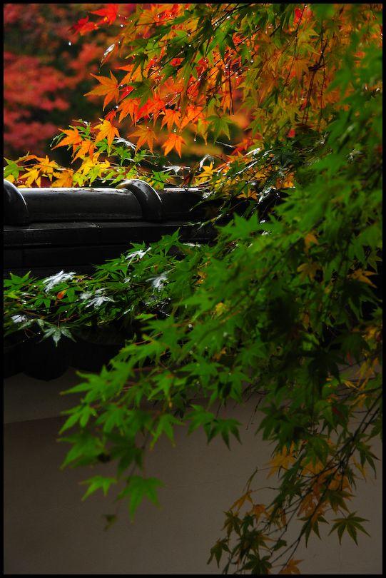 Rainy Day, Iwakura Jisso-in (岩倉実相院), 5