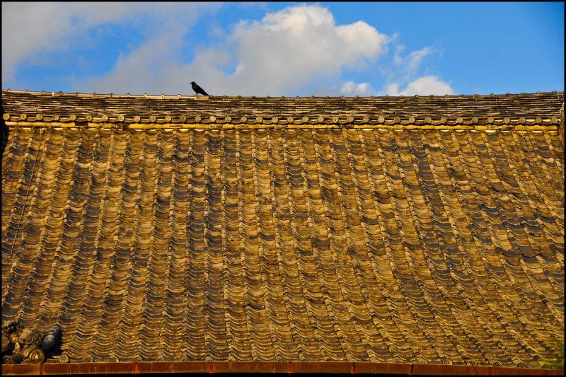 Evening Watch: Crow