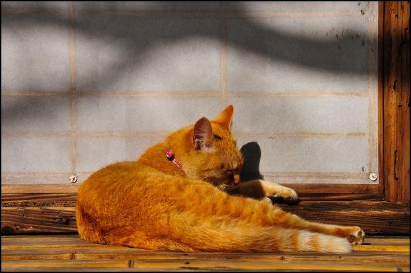 Zen Cat (禅の猫)