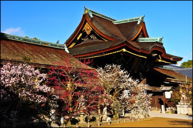 Plum Blossoms, Kitano Shrine