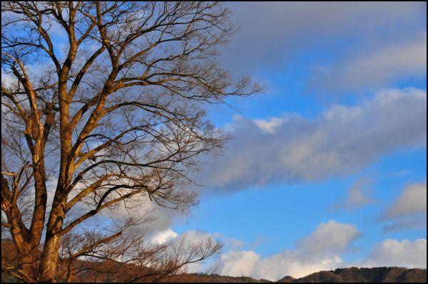 February Sky, Late Afternoon