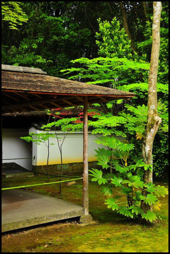 Spring Leaves: Koto-in Temple (高桐院)