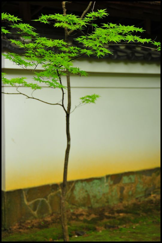 Spring Leaves: 佗