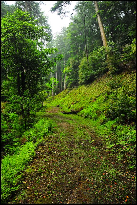Spring Leaves: Rainy Path