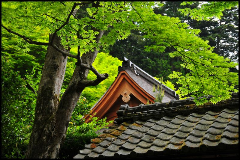 Spring Leaves: Jakko-in Temple (寂光院)