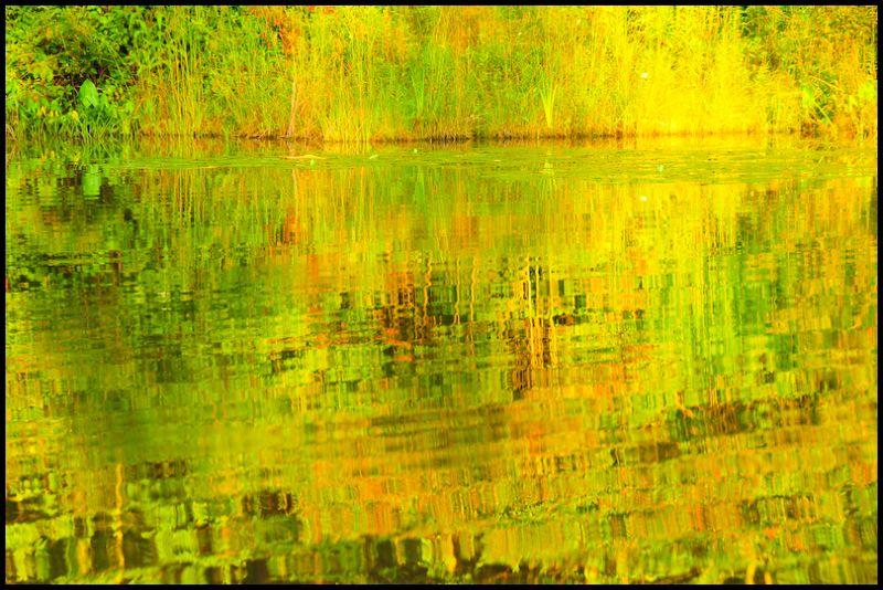 Pond, 2