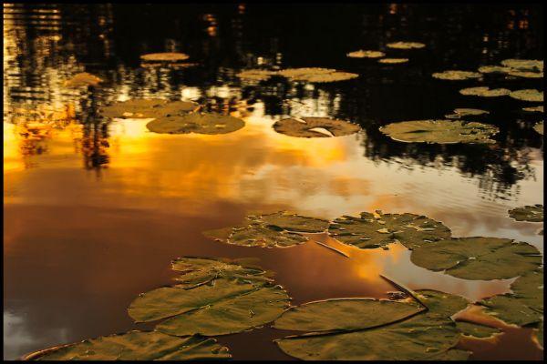 Pond, 5