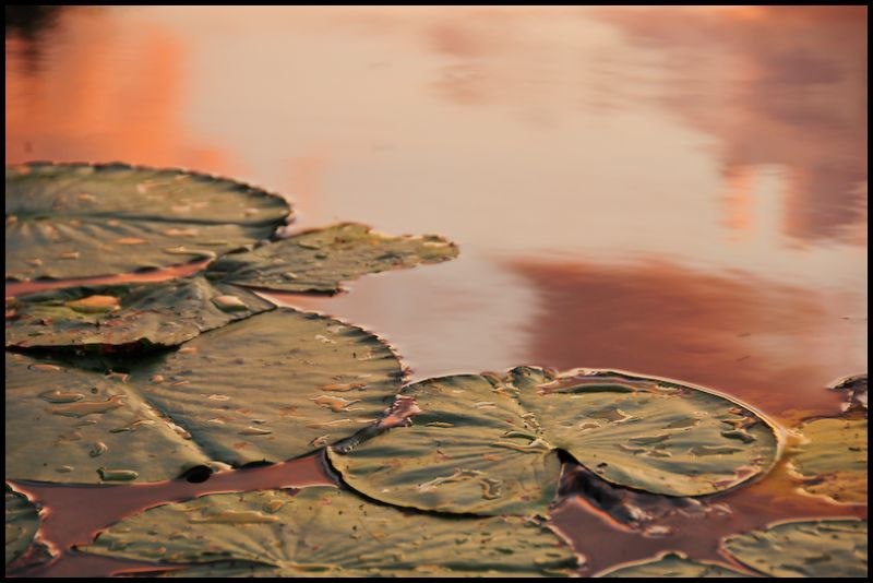 Pond, 7