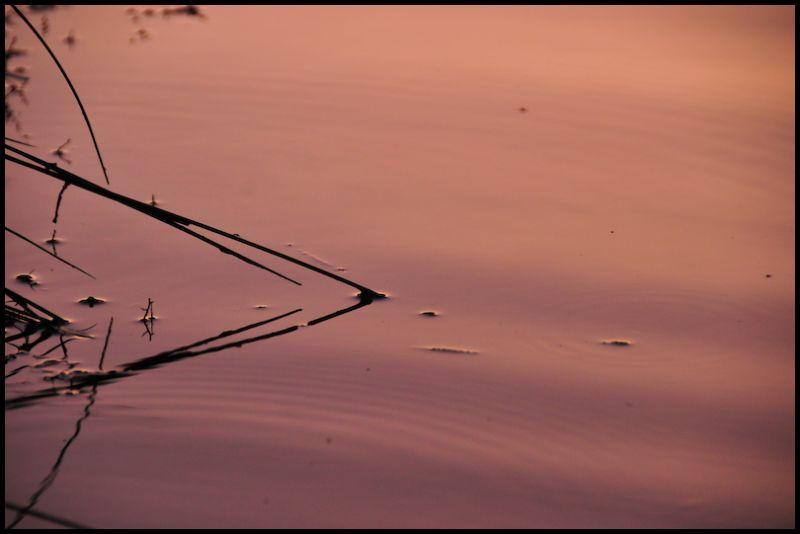 Pond, 8