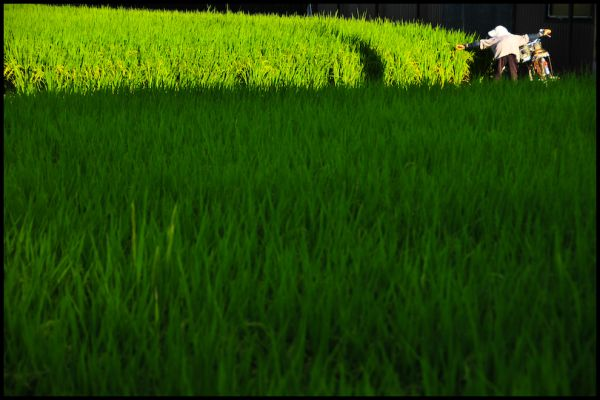 Rice's Progress