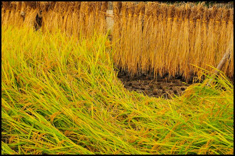 Harvest, 2