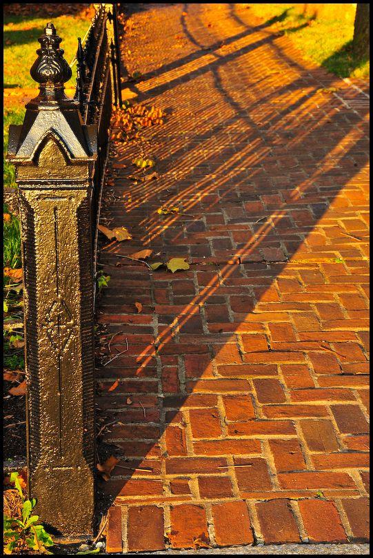 Evening Fence