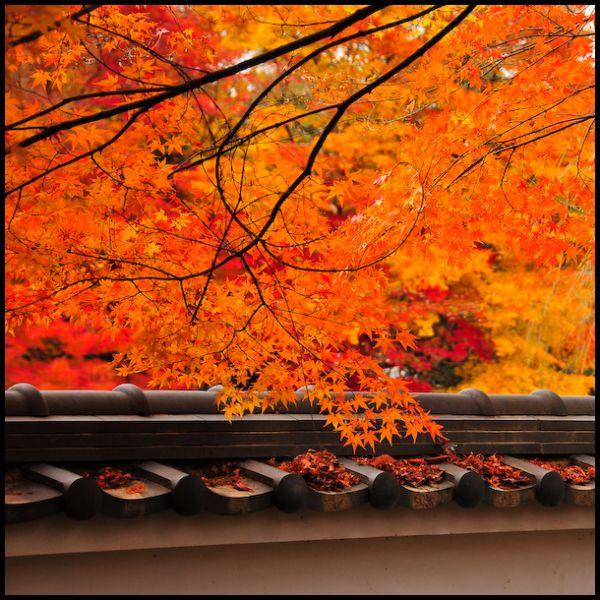 The Splendor of Autumn