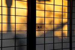 Winter Light: Shoji