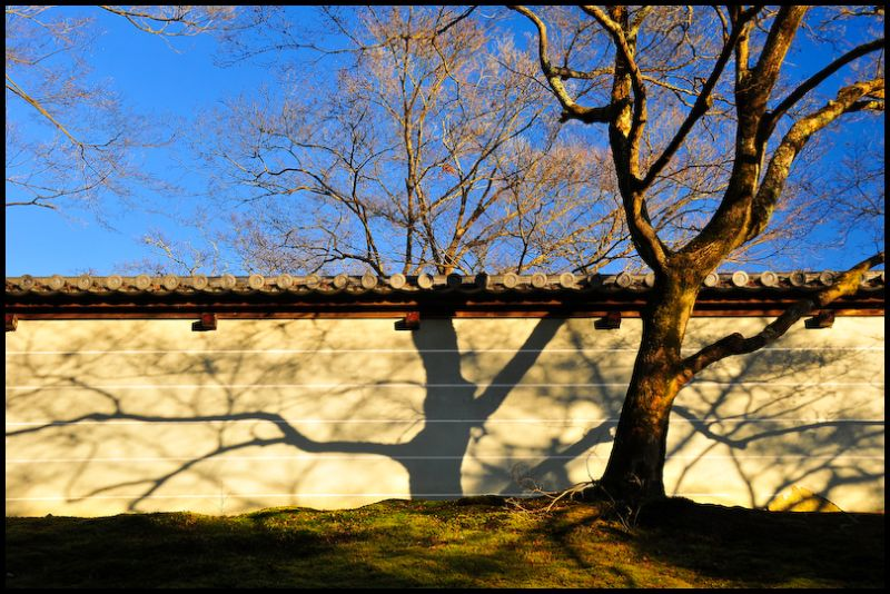 Winter Light: Temple Wall