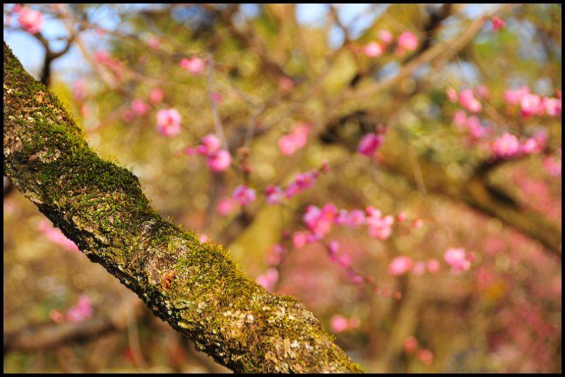 Dreams of Spring, 2