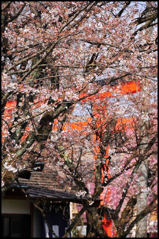 Hirano Shrine (平野神社)
