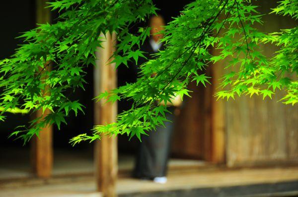 Sacred Spaces: Contemplation (蓮華寺)