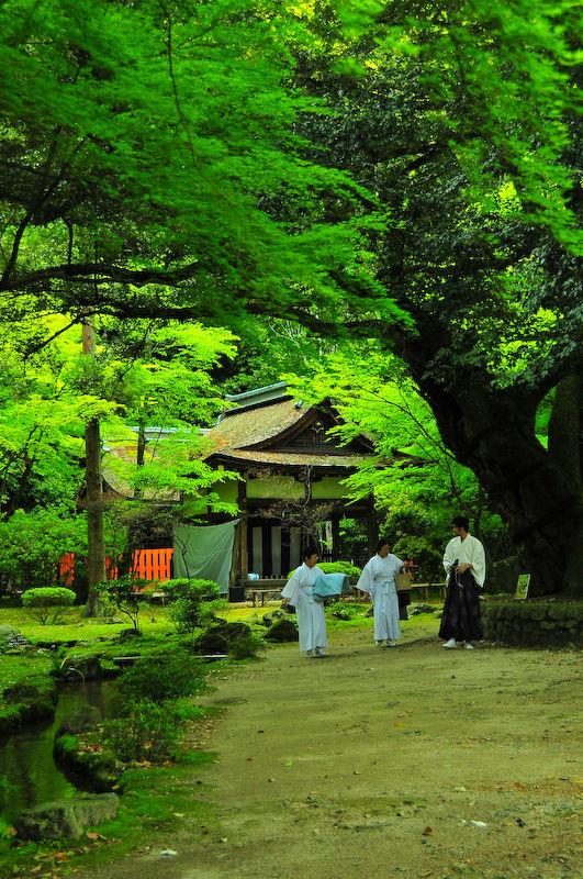 Dreams of Miyako (都の夢想), 15