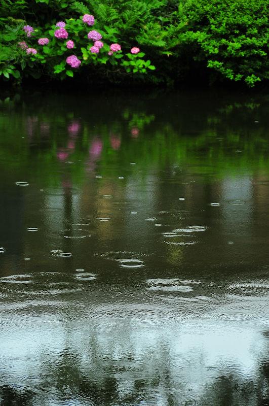 梅雨 (Rainy Season)