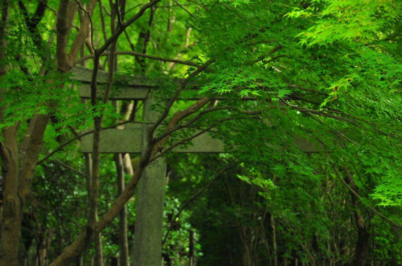 A Dream of Green