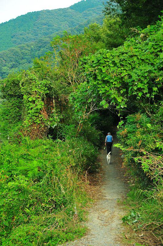 Mountain Stroll