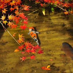 An Autumn Swim
