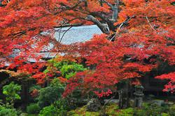秋の実相院