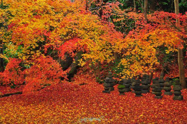 Autumn's Grand Finale