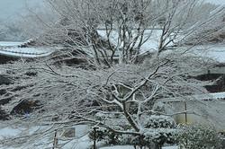 Winter Morning, Jisso-in Temple, 4