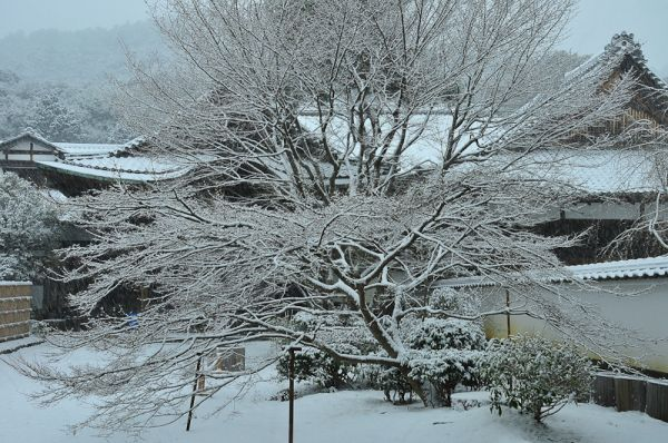 Winter Morning, Jisso-in Temple, 4