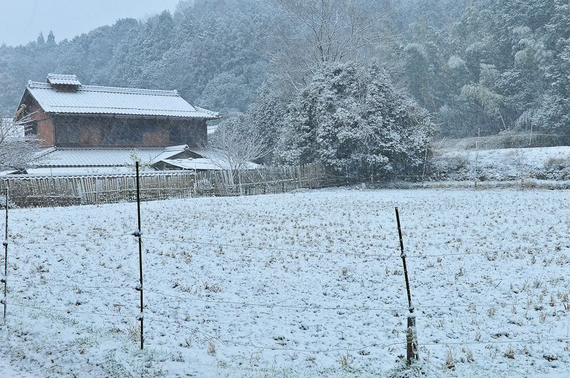 Winter Rice Field