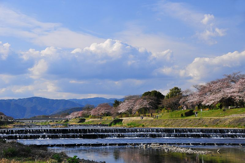 The Sakura Path
