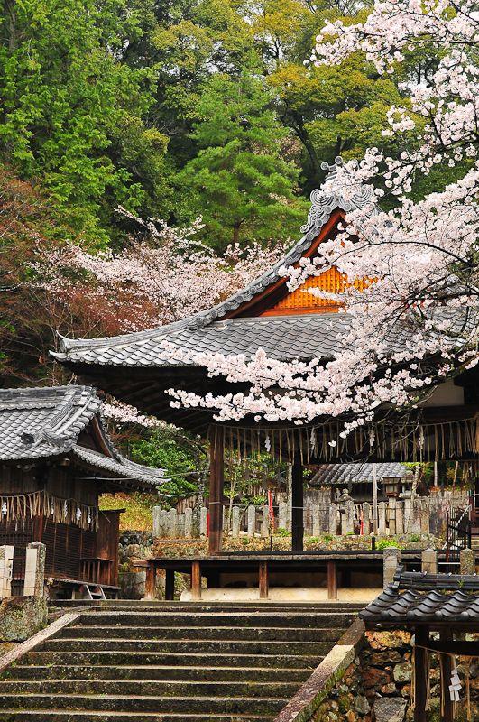 The Divine Sakura
