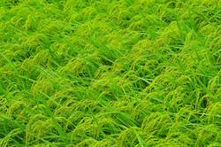 Fields of Emerald