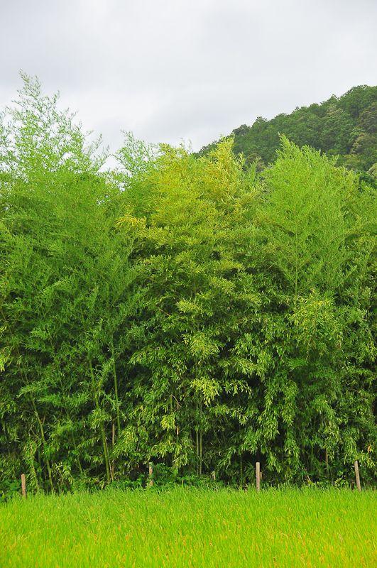 Rainy Day Greens