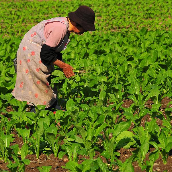Farming Women: Winter Crop