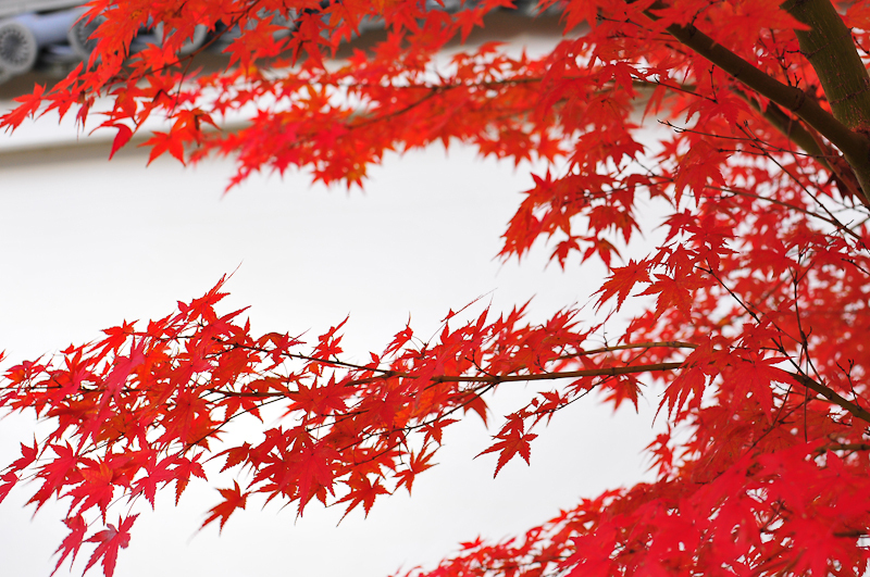 Red and White (紅白)