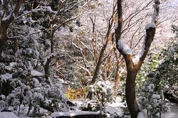 Winter Teahouse 「冬の茶室」